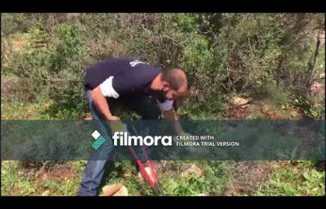 סרטון הדרכה חקלאית – השבחת זיתים