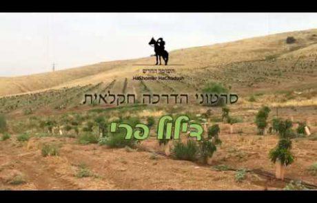 סרטון הדרכה חקלאית – דילול פרי במטע אבוקדו