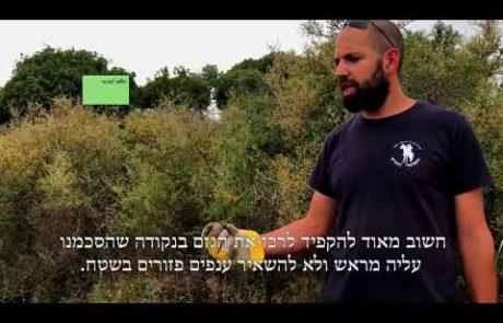 סרטון הדרכה חקלאית- השבחת מרעה