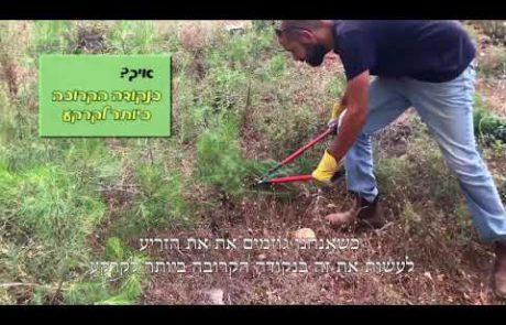 סרטון הדרכה חקלאית- דילול זרעים