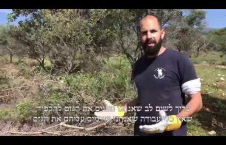 סרטון הדרכה חקלאית- איסוף גזם