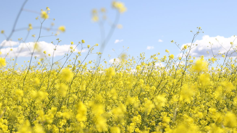 אביב העמים, האביב הערבי- ומה האביב שלי?